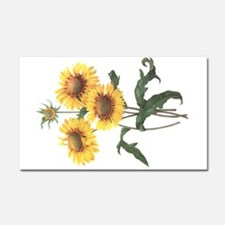 Redoute Sunflowers Car Magnet 20 x 12