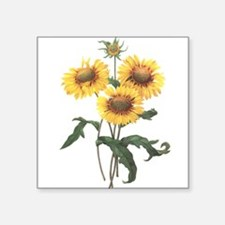 "Redoute Sunflowers Square Sticker 3"" x 3&quot"