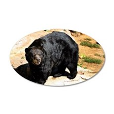 American Black Bear 3 22x14 Oval Wall Peel