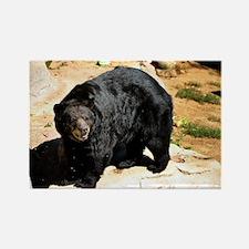 American Black Bear 3 Rectangle Magnet