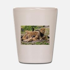 LION FAMILY Shot Glass