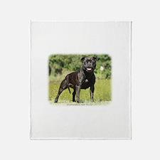 Staffordshire Bull Terrier 9R018D-024_2 Stadium B