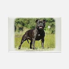 Staffordshire Bull Terrier 9R018D-024_2 Rectangle