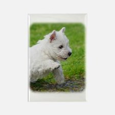 West Highland White Terrier AA060D-020 Rectangle M