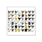 "48 Hens Promo Square Sticker 3"" x 3"""