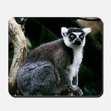 A portrait of a Ringtail Lemur Mousepad
