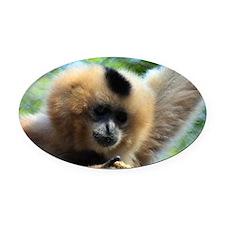 Golden-Cheeked Gibbon eatting 9 Oval Car Magnet