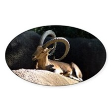 Nubian Ibex showing off his good side Decal
