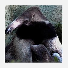 Mother Anteater nursing her young Tile Coaster