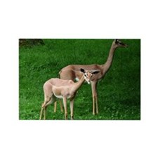 Two Gerenuk Antelope Rectangle Magnet (10 pack)
