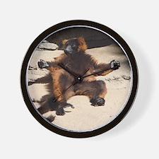 A lay-back red-ruffed lemur Wall Clock