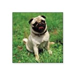 Cute Pug Square Sticker 3