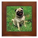 Cute Pug Framed Tile