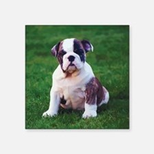 "Cute Bulldog Square Sticker 3"" x 3"""