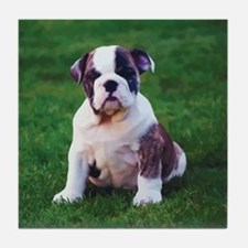 Cute Bulldog Tile Coaster