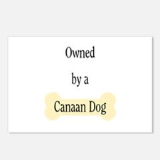 Owned by a Canaan Dog Postcards (Package of 8)