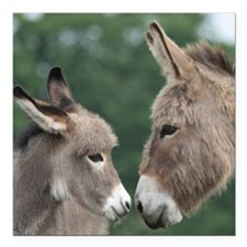 "Donkeys square car magnet 3"" x 3"""
