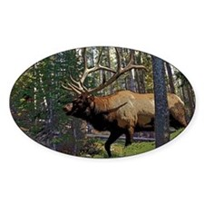 Bull elk Decal