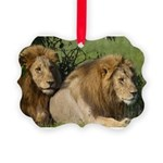 Two male brother lions Picture Ornament