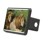 Two male brother lions Rectangular Hitch Cover