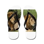 Two male brother lions Flip Flops