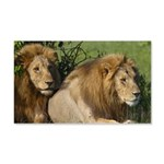 Two male brother lions 20x12 Wall Decal