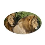 Two male brother lions 20x12 Oval Wall Decal