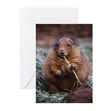close-up Prairie Dog Greeting Cards (Pk of 10)