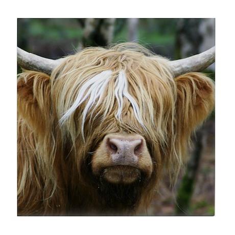 Highland Cow Tile Coaster