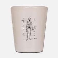 Skeleton Diagram Shot Glass