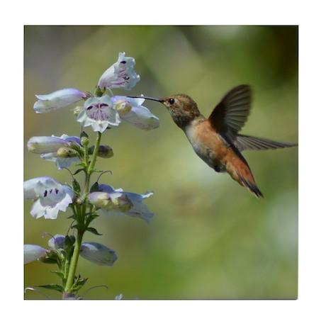 Hummingbird 4851 - Tile Coaster