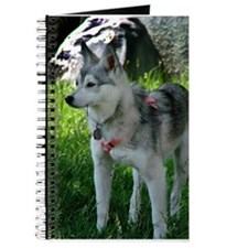 Alaskan Klee Kai looking into the distance Journal