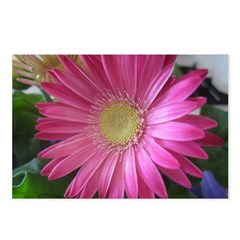 Pink Daisy Princess Postcards (Package of 8)