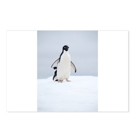 Adelie Penguin in Antarctica Postcards (Package of