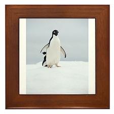 Adelie Penguin in Antarctica Framed Tile