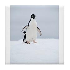 Adelie Penguin in Antarctica Tile Coaster
