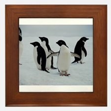 Adelie Penguin in Antarctica Framed Tile