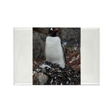 Gentoo Penguin at Port Lockroy Rectangle Magnet