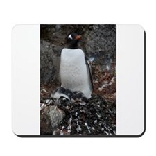 Gentoo Penguin at Port Lockroy Mousepad
