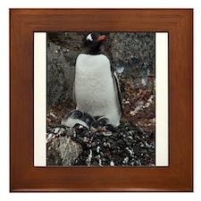 Gentoo Penguin at Port Lockroy Framed Tile