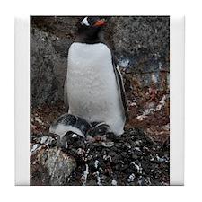 Gentoo Penguin at Port Lockroy Tile Coaster