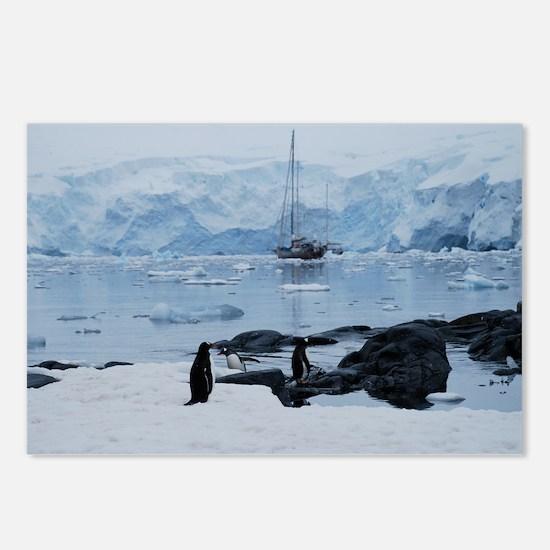 Gentoo Penguin at Port Lockroy Postcards (Package