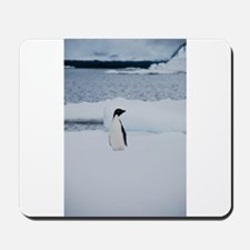 Adelie Penguin in Antarctica Mousepad