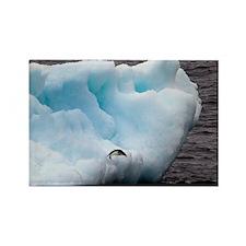 Adelie Penguin on Iceberg Rectangle Magnet