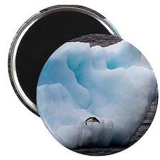 Adelie Penguin on Iceberg Magnet
