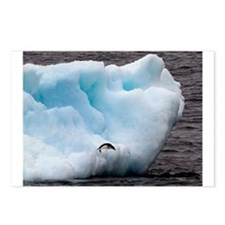 Adelie Penguin on Iceberg Postcards (Package of 8)