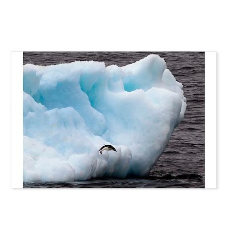 Adelie Penguin on Iceberg Postcards (Package of 8)