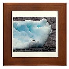 Adelie Penguin on Iceberg Framed Tile