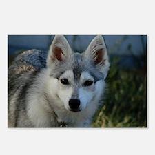 Alaskan Klee Kai Puppy Portrait Postcards (Package