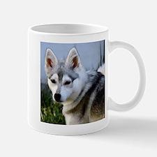 Alaskan Klee Kai Puppy looking over her shoulder M